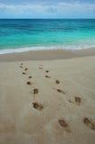 Pegadas em uma praia tropical. Foto de Stock