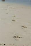 Pegadas na areia Imagem de Stock