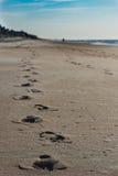 Pegadas na areia da manhã Imagens de Stock