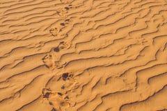 Pegadas na areia no deserto vermelho no nascer do sol imagem de stock