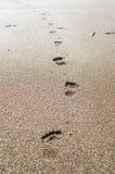Pegadas na areia no por do sol foto de stock royalty free