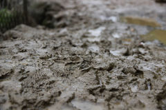 Pegadas na lama Fotografia de Stock
