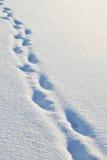 Pegadas na neve imagens de stock royalty free