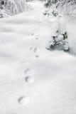 Pegadas na neve do inverno fotografia de stock royalty free