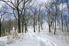 Pegadas na neve na floresta do inverno Fotos de Stock Royalty Free