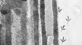 Pegadas na neve Pegadas na primeira neve Imprima imagem de stock royalty free