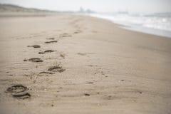 Pegadas na praia Fotos de Stock
