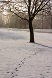 Pegadas nevado Imagens de Stock