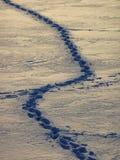 Pegadas no lago congelado Fotos de Stock