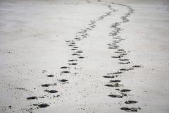 Pegadas no Sandy Beach foto de stock