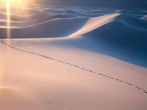 Pegadas que cruzam-se através da duna de areia Fotos de Stock Royalty Free