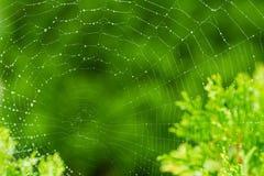Pegadizo - un web de araña Fotografía de archivo