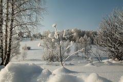 Pegar la planta de la nieve profunda en medio de abedules y de arbustos Imagen de archivo