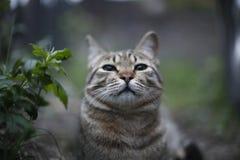 Pegarado o cheiro do alimento, prick acima suas orelhas Foto de Stock