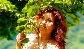 Pegarando os fowers bonitos da árvore de Linden no dia de verão brilhante Fotografia de Stock Royalty Free
