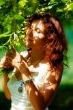 Pegarando os fowers bonitos da árvore de Linden no dia de verão brilhante Imagens de Stock Royalty Free