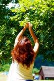 Pegarando os fowers bonitos da árvore de Linden no dia de verão brilhante Foto de Stock Royalty Free
