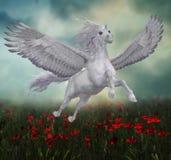 Pegasus και κόκκινες παπαρούνες Στοκ Εικόνες