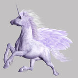 Pegasus. A powerful flying Pegasus - isolated on gray Stock Photos