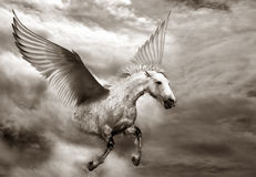 Pegasus Photos stock