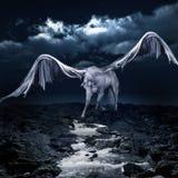 Pegasus buvant d'un courant Photographie stock