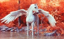 Pegasus mítico que levanta em uma floresta encantado ilustração stock
