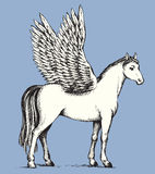 Pegasus. Vector drawing Royalty Free Stock Photos
