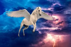 Pegasus winged legendary white horse flying with spread wings.  stock photography