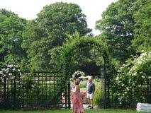 Peggy Rockefeller Rose Garden 20 Royaltyfri Fotografi