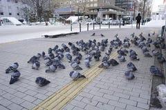 Pegion nell'inverno Immagine Stock
