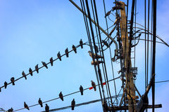Pegion op telephoneline Stock Foto's