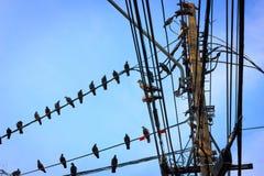 Pegion sul telephoneline Fotografie Stock