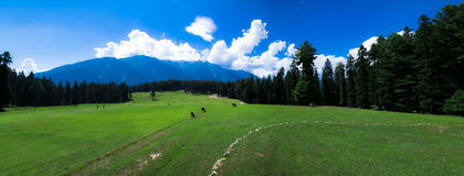 Pehelgam de Kashmir Valley do panorama Imagem de Stock