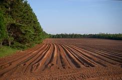 PEI Field som är förberedd för att plantera arkivbild