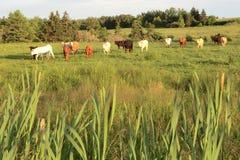 PEI Pasture lizenzfreie stockfotos