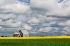 PEI Rural Farmland Royaltyfria Bilder