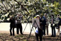 Peignant et photographiant les fleurs de cerise Images libres de droits