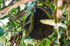 Peigne d'abeille de miel Images libres de droits