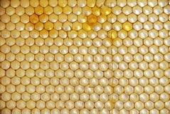 Peigne de miel avec le pollen Photo libre de droits