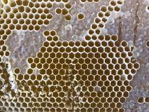 Peigne de miel d'abeille images libres de droits