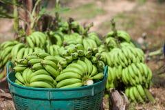 Peigne des bananes dans le panier Photographie stock