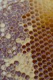 Peigne texturisé 6 de miel Photos stock