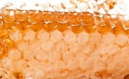 Peignes de miel Photos libres de droits