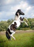 Peignez l'élevage de cheval Images libres de droits