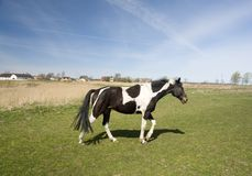 Peignez le cheval Photo stock