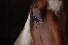 Peignez le détail d'oeil de cheval Photos stock