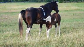 Peignez les soins de poulain de cheval Images stock