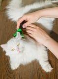 Peinar el gato mullido blanco Furminator del angora Imagen de archivo libre de regalías