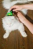 Peinar el gato mullido blanco Furminator del angora Imagen de archivo