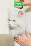 Peinar el gato mullido blanco Furminator del angora Fotos de archivo